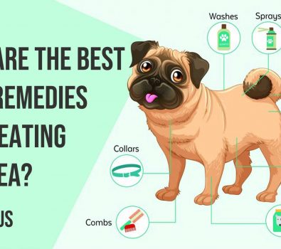 What are the Best Home Remedies for Treating Dog Flea?