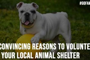 6 Convincing Reasons To Volunteer at Your Local Animal Shelter